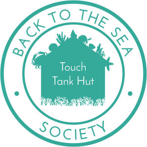 Back to the Sea logo